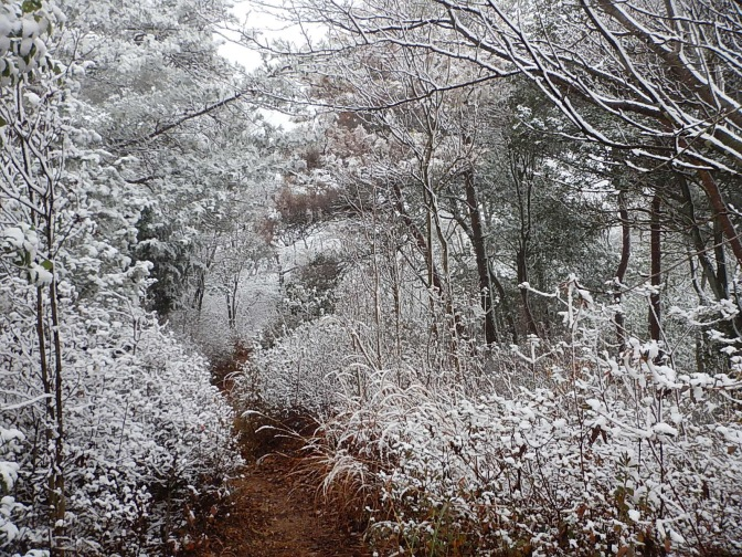 2014/12/06 紅葉と初雪の鳩吹山~継鹿尾山ルート