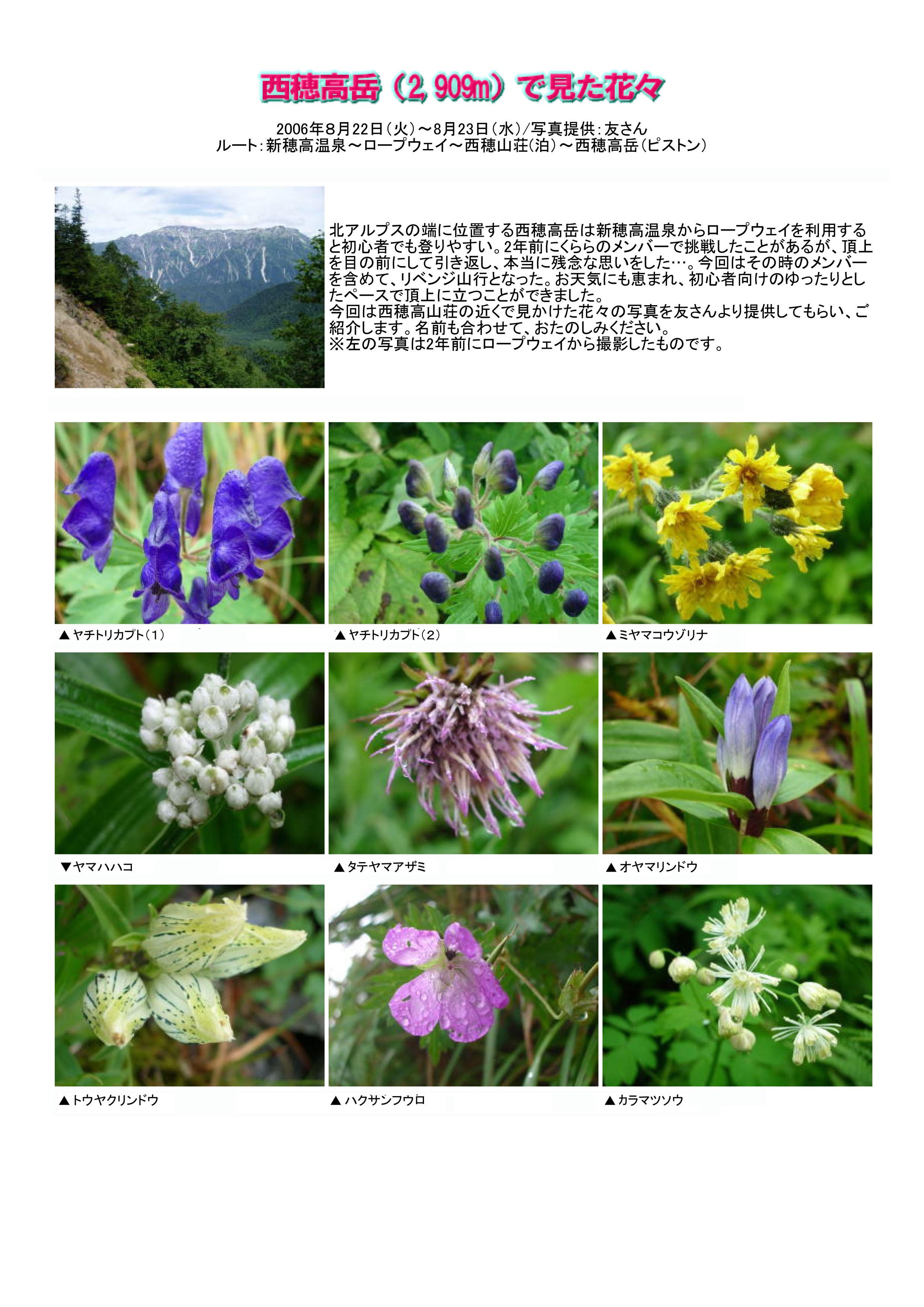 西穂高岳で見た花々1