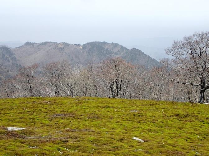 2016/04/24(日)   イブネ&クラシ(鈴鹿山脈)