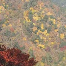 ハライド上り近景紅葉
