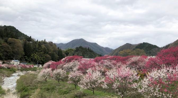 2019/04/29 恵那山と花桃の里
