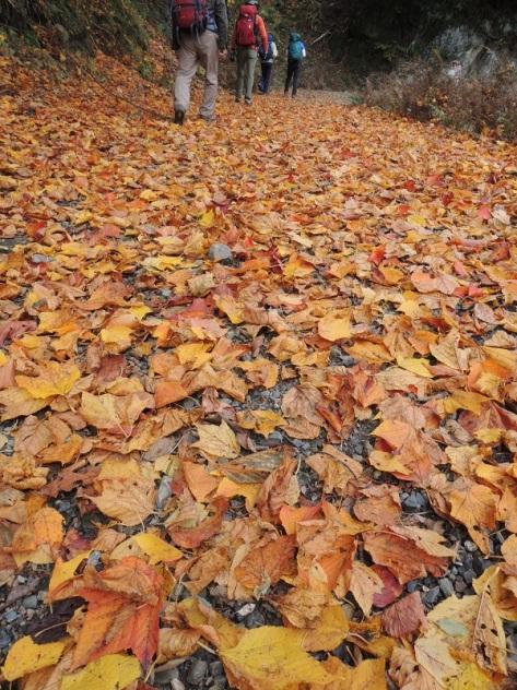 4落ち葉のじゅうたんs