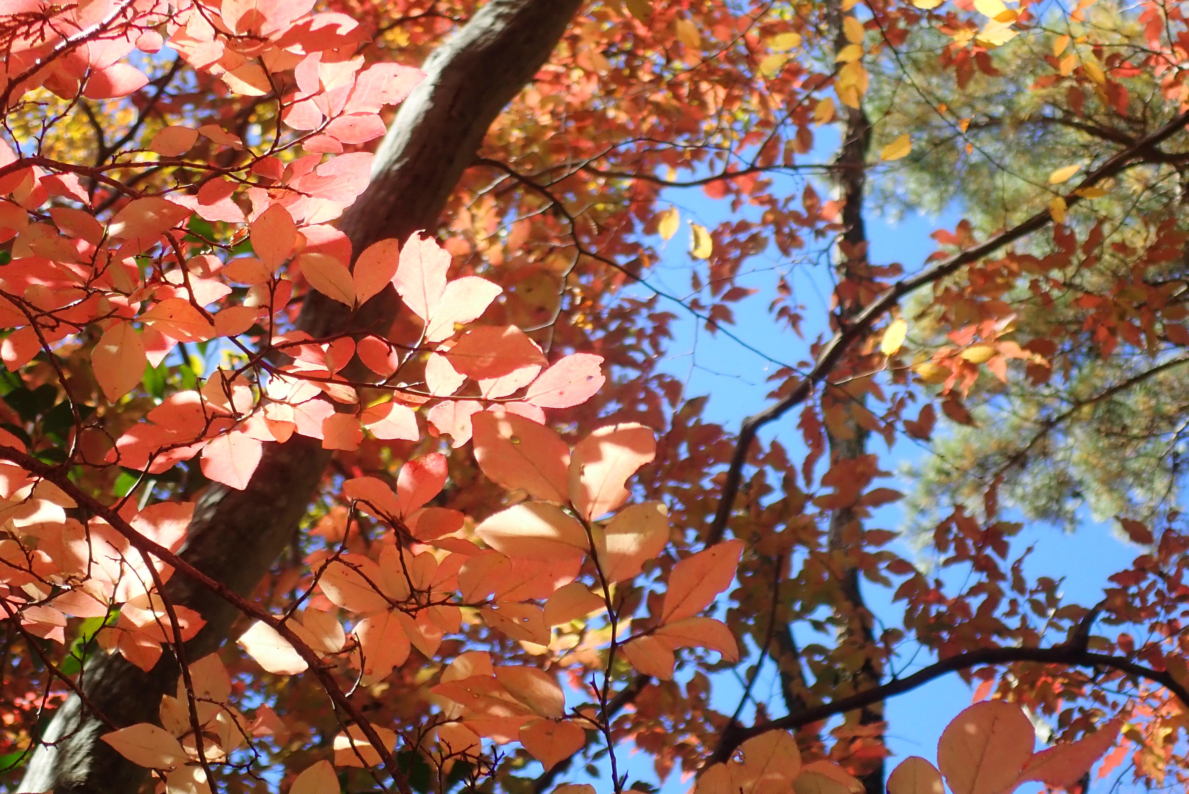 2020/11/14雲母峰『鈴鹿の紅葉を楽しもう』