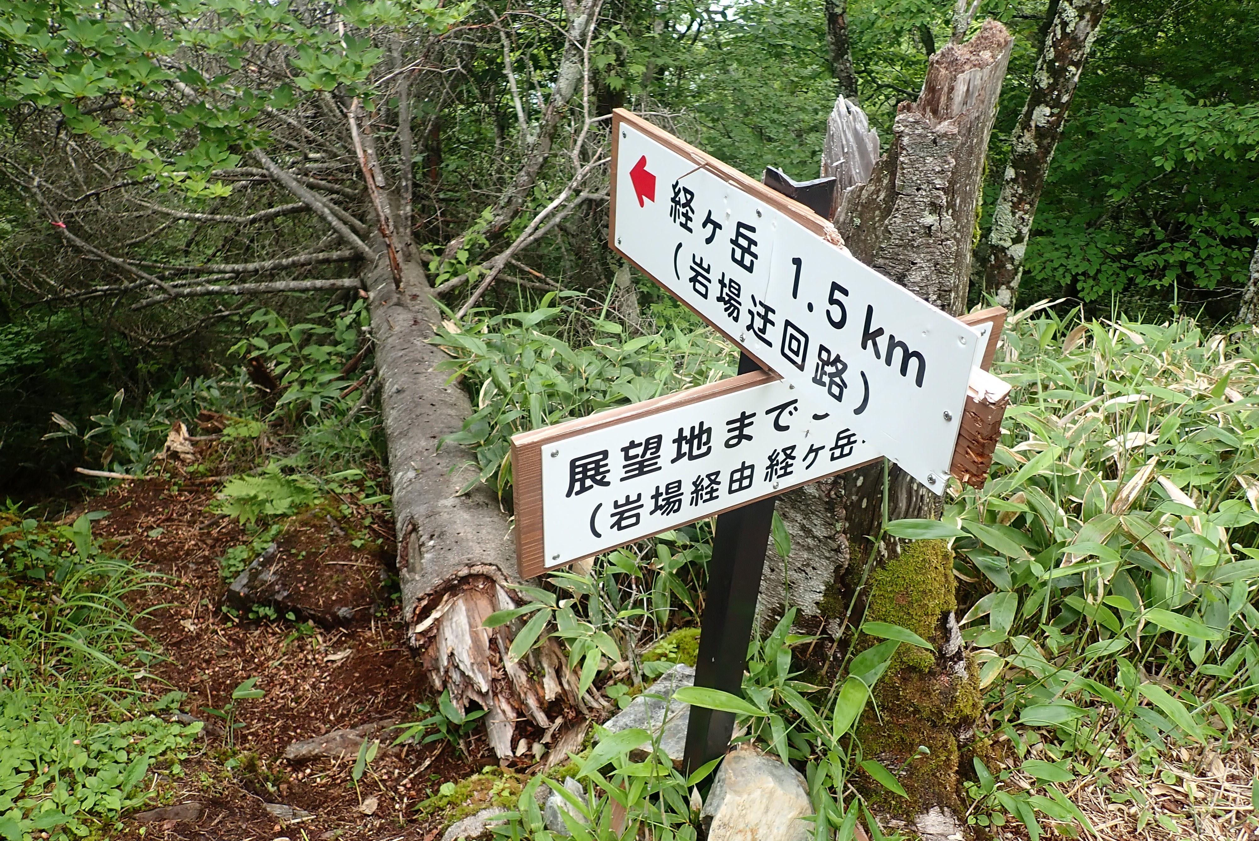 2021/07/03 権兵衛峠から経ヶ岳『足にやさしい道です』
